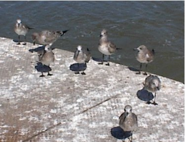 A Flock of Seagulls!!